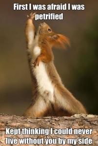 DramaticSquirrel-23716