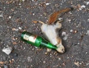drunk-squirrel