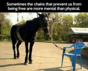 horsechains